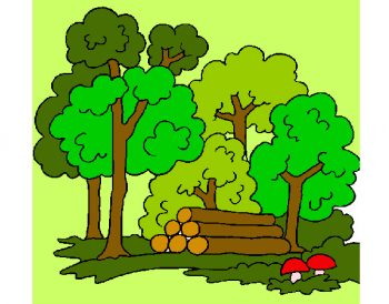 bosc-2-naturalesa-el-bosc-pintat-per-19043-531905